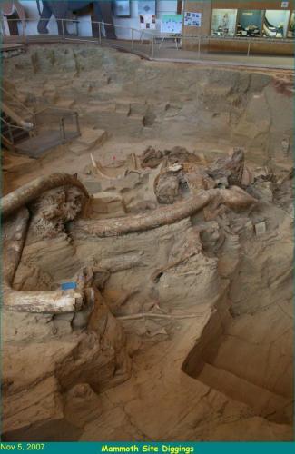 110507_Museum_Mammoth_Site (10)