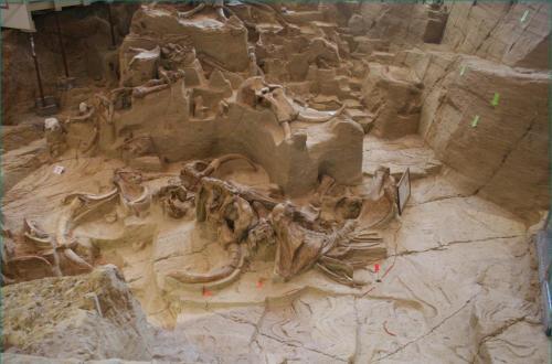 110507_Museum_Mammoth_Site (2)
