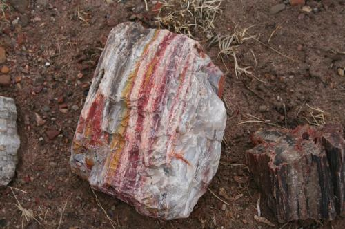 Petrified-Forest-Arizona (10)