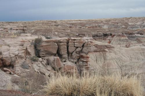 Petrified-Forest-Arizona (12)