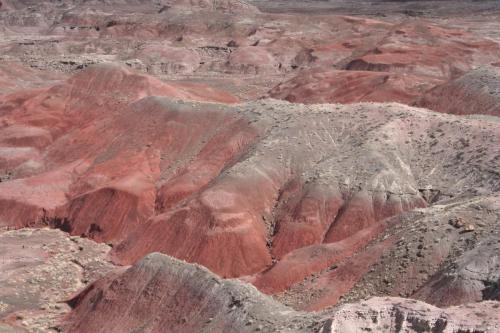 Petrified-Forest-Arizona (33)