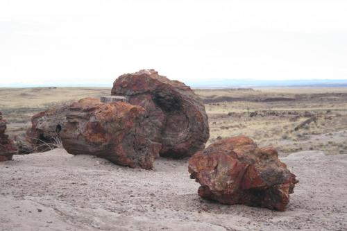 Petrified-Forest-Arizona (5)