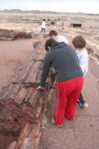 Petrified-Forest-Arizona (8)