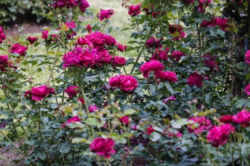 Rose-Test (4)