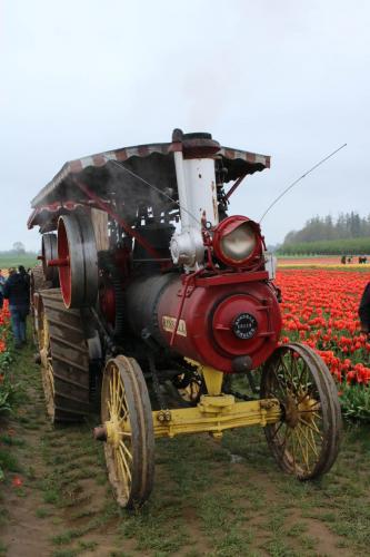 Tulip-festival (12)-2